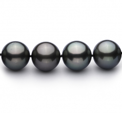 13-15.5mm AAA Quality Tahitian Cultured Pearl Necklace in Black